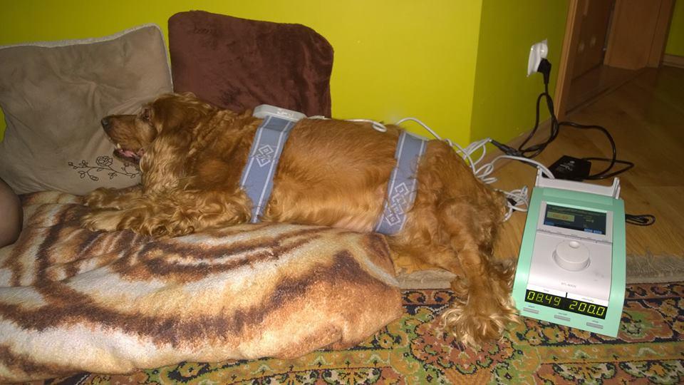 Spondyloza kręgołupa - magnetoterapia