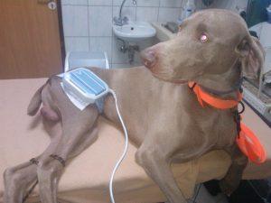 Staw rzekomy - magnetoterapia